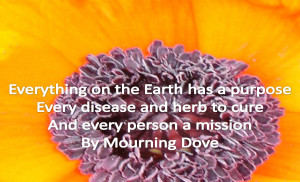 Mourning Dove Quotes