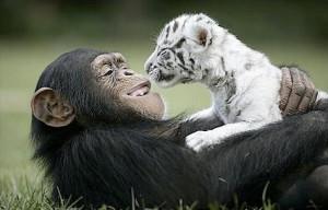 Cool Animal Pix - Friends 01