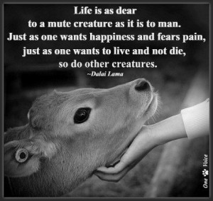 essay on treat animals humanely Can animals you eat be treated humanely  federal rules, penned in 1958 and broadened in 1978, set out how to treat animals in the slaughterhouse.