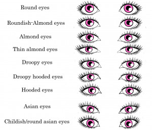 The human eye. Consider shape, size, position, depth and colour.