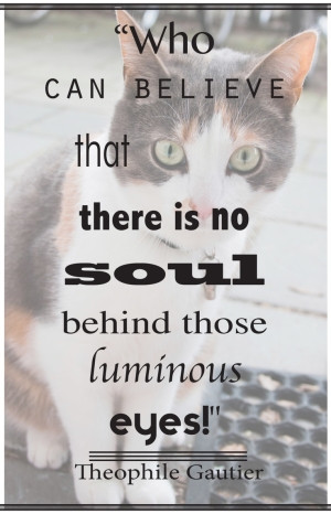 """... Soul Behind Those Luminous Eyes """" - Theophile Gautier ~ Cat Quotes"""
