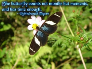 butterfly counts moments