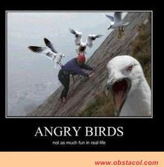 QUOTES ABOUT BIRDS   real life quotes true story quotes tumblr funny ...