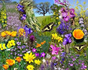 Spreuken over lente en voorjaar . Citaten, oneliners, quotes ...