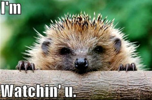 Animal Humor hedgehog funny