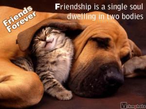 CATEGORY:- friendship orkut scraps, cat, dog, quotes