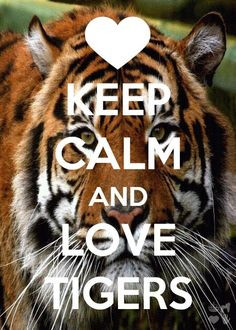 tiger love More
