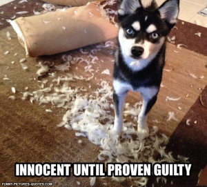 Innocent | Funny Pictures and Quotes