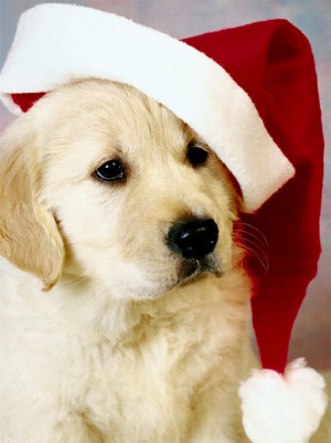 Christmas Christmas☆pets!