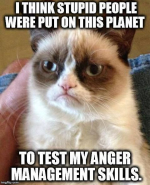 grumpy cat meme, sarcastic funny, grouchy cat …For more funny quotes ...