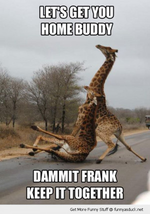 giraffe drunk road falling animal funny pics pictures pic picture ...