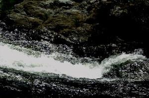 Can a Dead Fish Swim Downstream