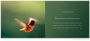 Hummingbird Symbolism – excerpt from the book Letters From Earth By ...