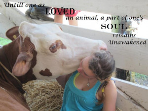Dairy show cow quotes