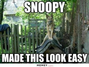 Dog Sitting On A Dog House