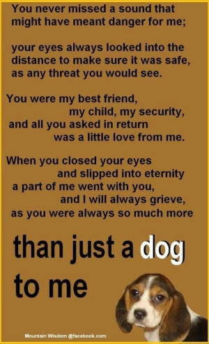 ... more than a dog to me ♥ Love and miss my angels so much. by petijo