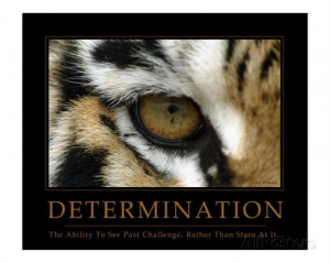 Determination - Eye of the Tiger Photographic Print