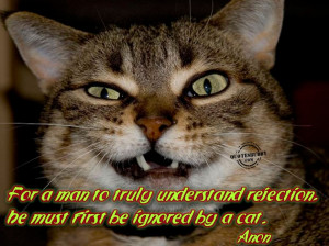 Funny Cat Quotes With Cute Pictures: Cat Quotes About Funny Life And ...