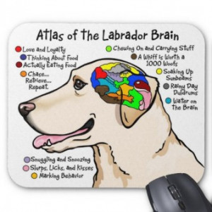 dog-brain-funny-quotes_561037120