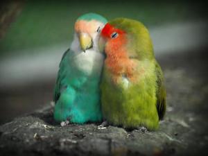 Love Birds Wallpapers | Beautiful Birds Pictures