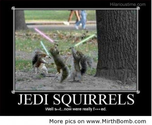 home images jedi funny squirrels jedi funny squirrels facebook twitter ...