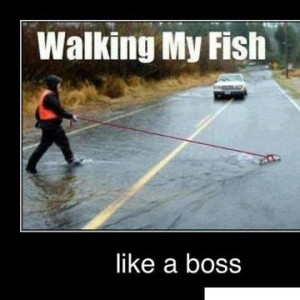 daa-small-Walking-my-fish-like-a-boss.jpg