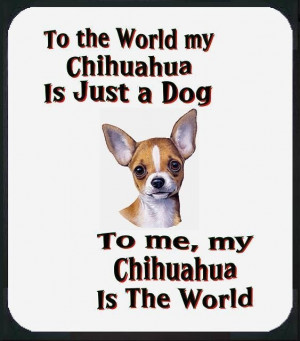 My chihuahuas ARE the world to me!