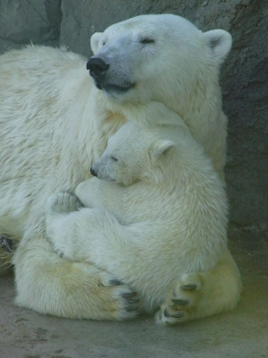 Bear hug - There are to many adorable