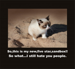 Displaying 13> Images For - Grumpy Cat Quotes...