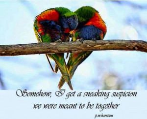 quotes cute love quotes cute love quotes cute love quotes