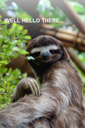 The Way of the sloth funny sloth pictures 10