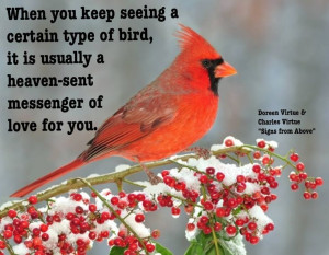 When you keep seeing a certain type of bird, it is usually a heaven ...