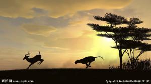 奔跑的动物