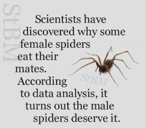 funny spiders logic-W630
