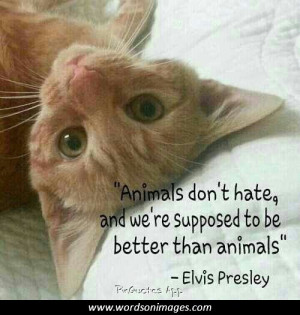 Famous elvis quotes