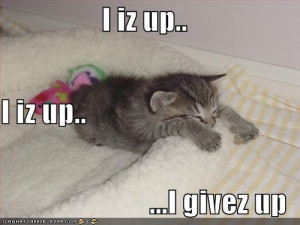 My Top Collection Funny kitten pics 5