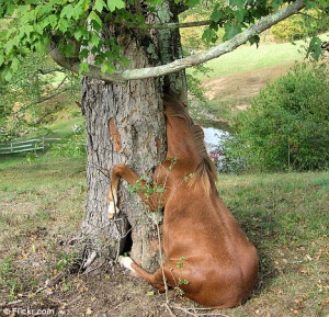 Horsing Around: The curious filly, called Gracie, caught in the tree