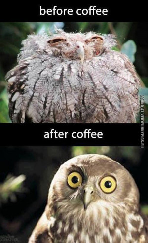 before-coffee-vs-after-coffee-owl