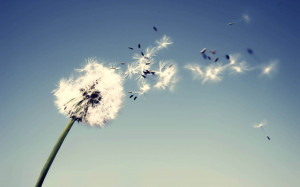 ... Wallpaper Zone Provides You The Dandelion Flowers Wallpapers wallpaper