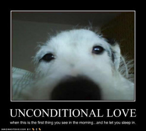 funny dog pictures unconditional love