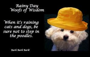 dogs rainy day quotes | Rainy Day Wisdom
