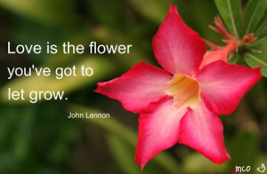 ... .com/love-is-the-flower-youve-got-to-let-grow-flowers-quote