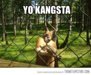 funny kangaroo crossing arms zoo