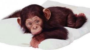 kiss monkey cute