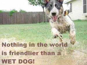 Pet Quotes Back Pets Home