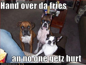 Labels: funny dog quotes about food , funny dog videos at 20:31