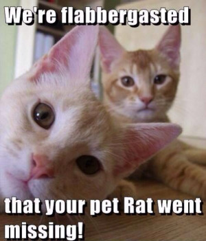 Cats about a rat saying