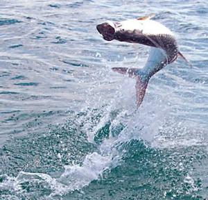 fly fishing quotes | Tarpon Fly Fishing