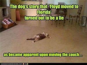 ... funny-pictures-the-dogs-story-that-floyd-moved-to-florida-turned-out