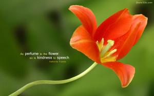 Flower Quotes Wallpaper Flower quotes wallpaper flower